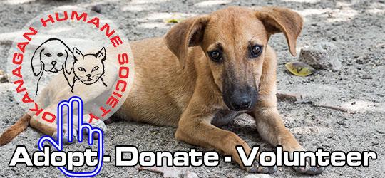 Save animals donation - Okanagan Humane Society banner